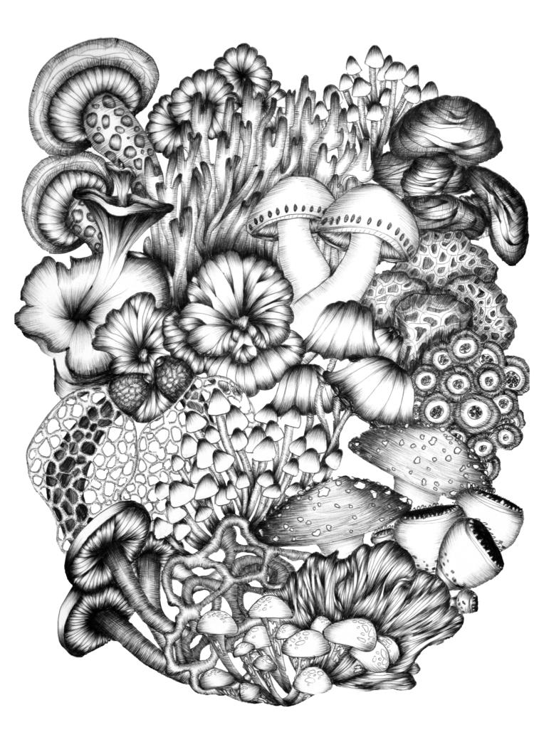 Medley Mushrooms. Ballpoint Pen - ecmazurart | ello