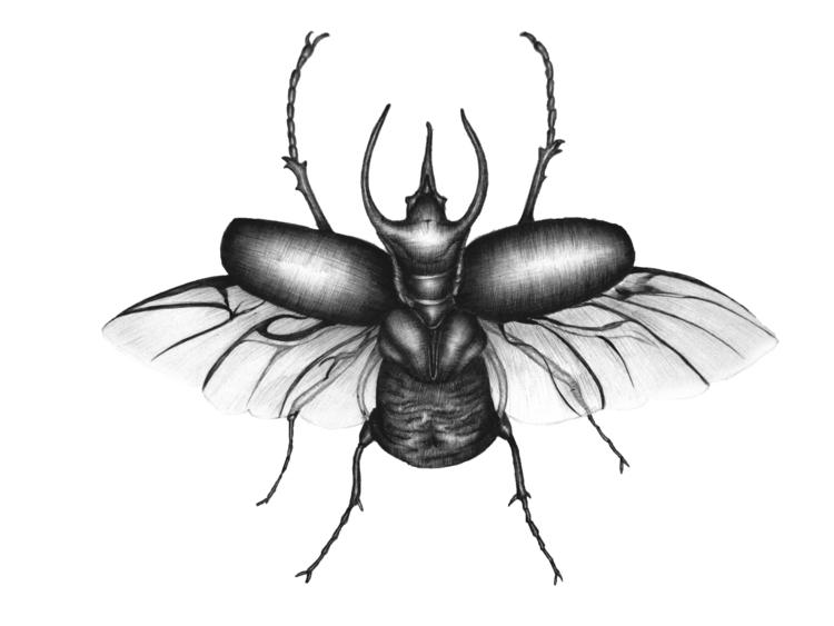 Beetle Wings. Ballpoint Pen. 20 - ecmazurart | ello