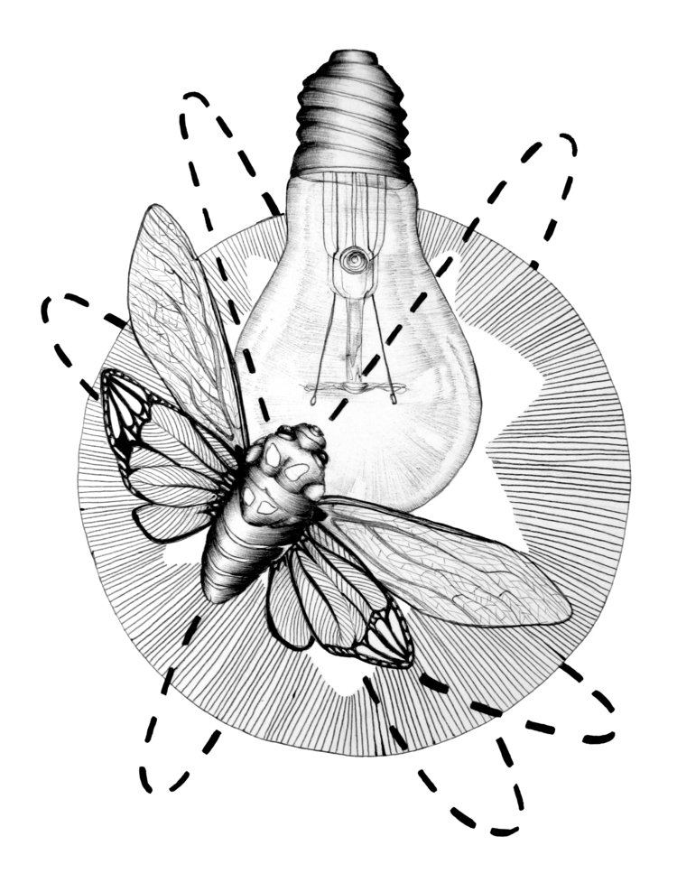 Moth Flame. Ballpoint Pen. 2016 - ecmazurart | ello