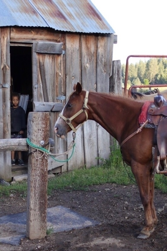 son peeking horse - farmlife, farms - willowstyleco | ello