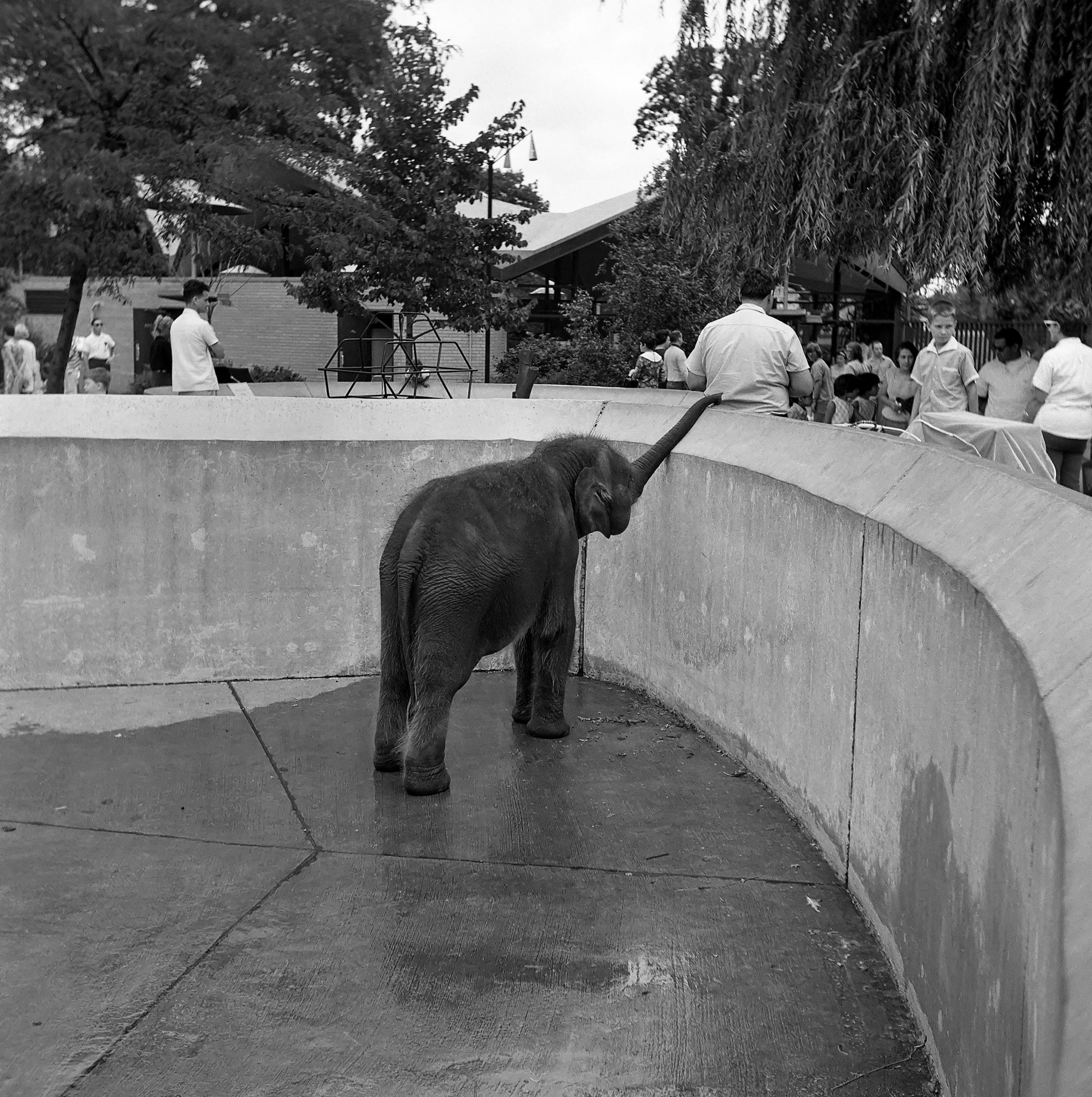 Lincoln Park Zoo • Late 60s - capnvideo | ello