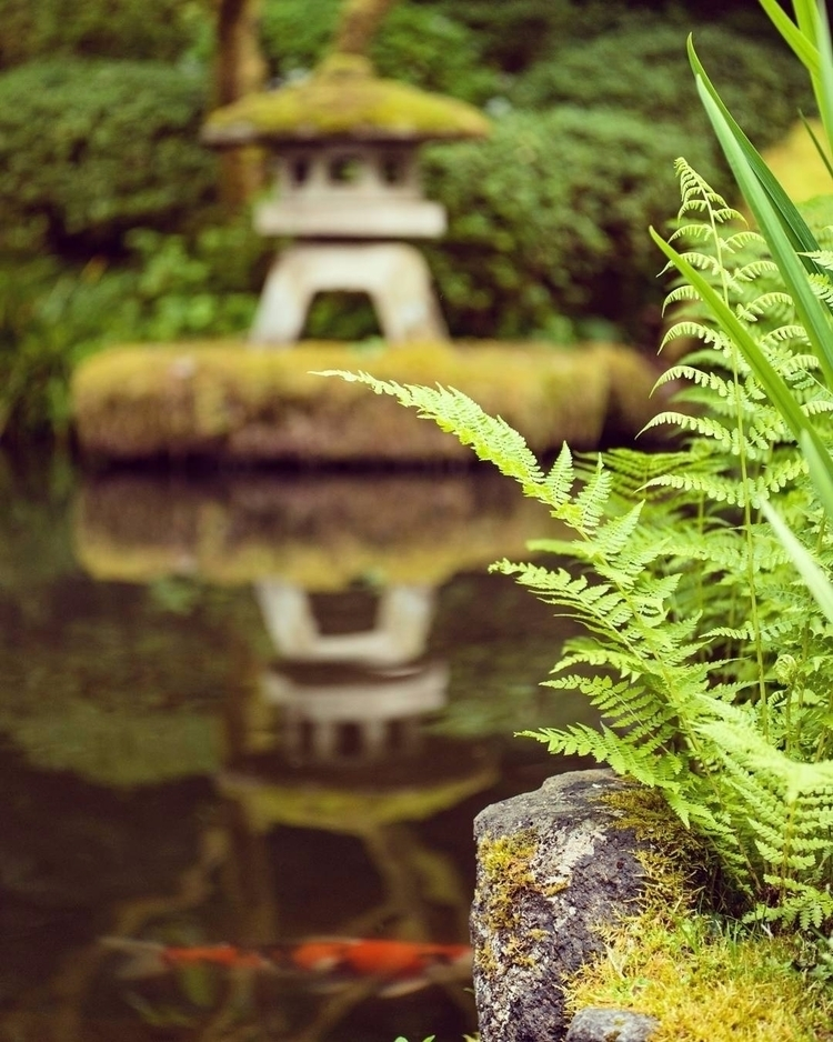 japanese garden zen moment. cha - wasimofnazareth | ello