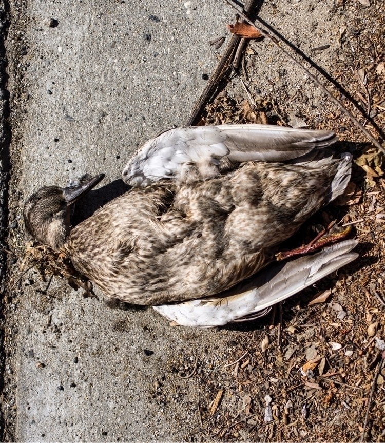 Walking chronicles: dead birds  - talyo | ello