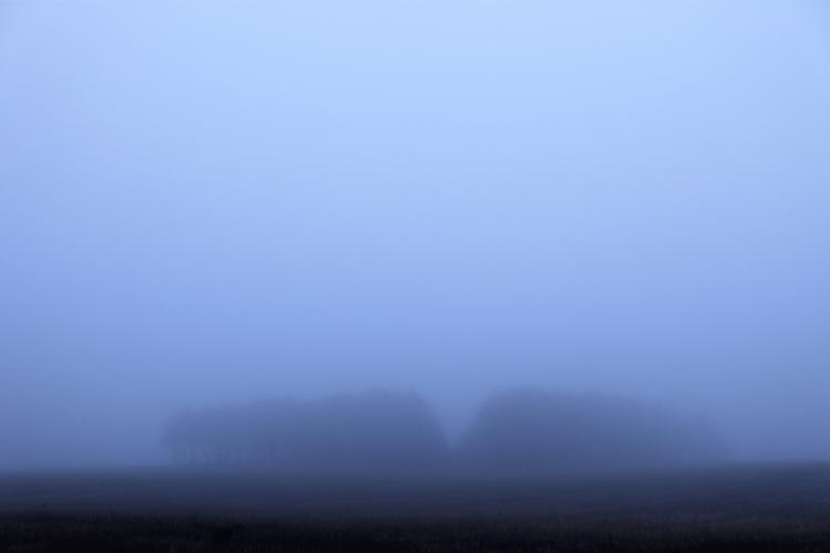 deep - fog, mist, nebel, forest - hansafan | ello
