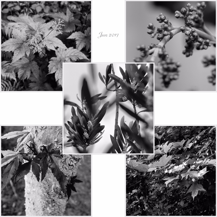 いのちつなぐものたち Generations - Jun. 2 - juria | ello