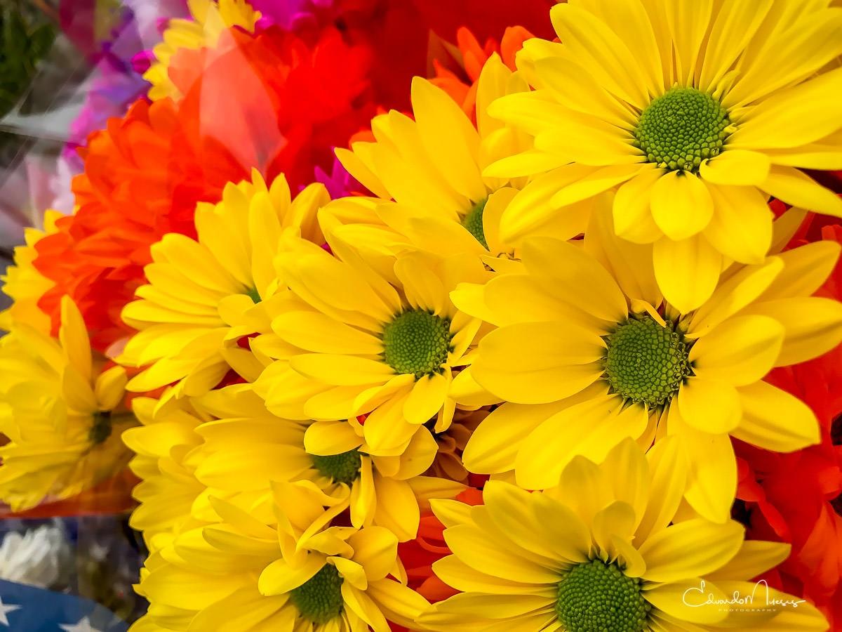 Happy Monday!! $closeup   [Ello - photografia   ello