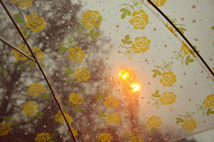 rain, umbrella, pnw, pacificnorthwest - cokes | ello
