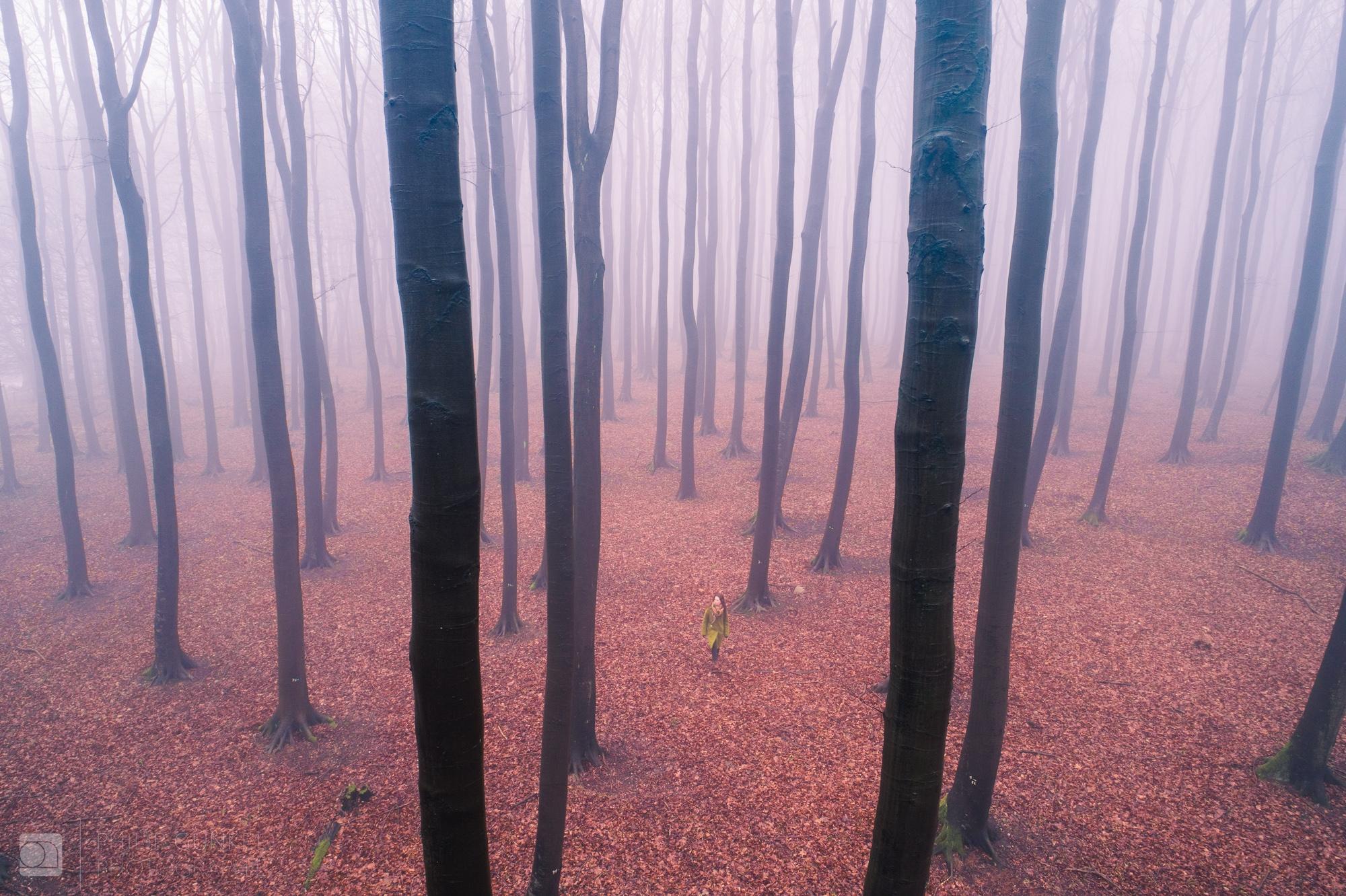 Exploring haunting forests Rüge - phigun | ello