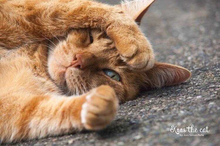 cats, photography - jonisimonpena | ello
