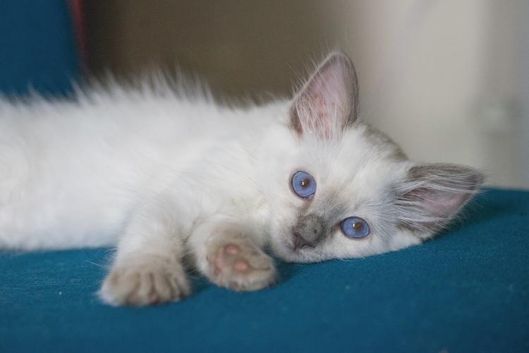 *Waiting Ylva growing day day - cat - jeffmoreau | ello