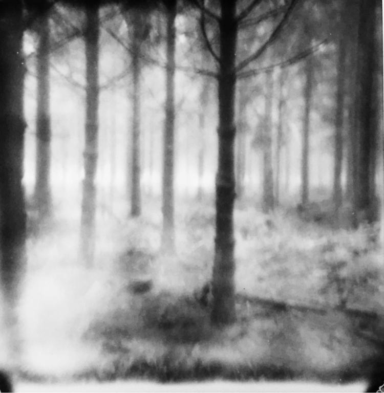 Foggy woods Waimes - jasmijnduterloo | ello