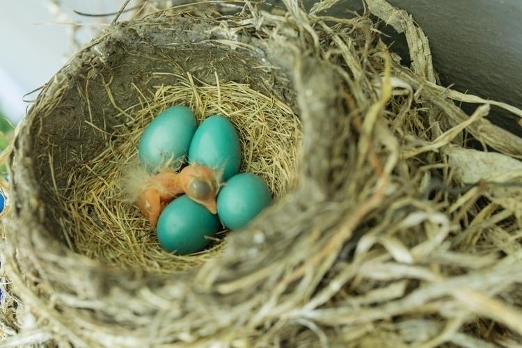 world guy - babybird, nature, animals - madelinejean | ello