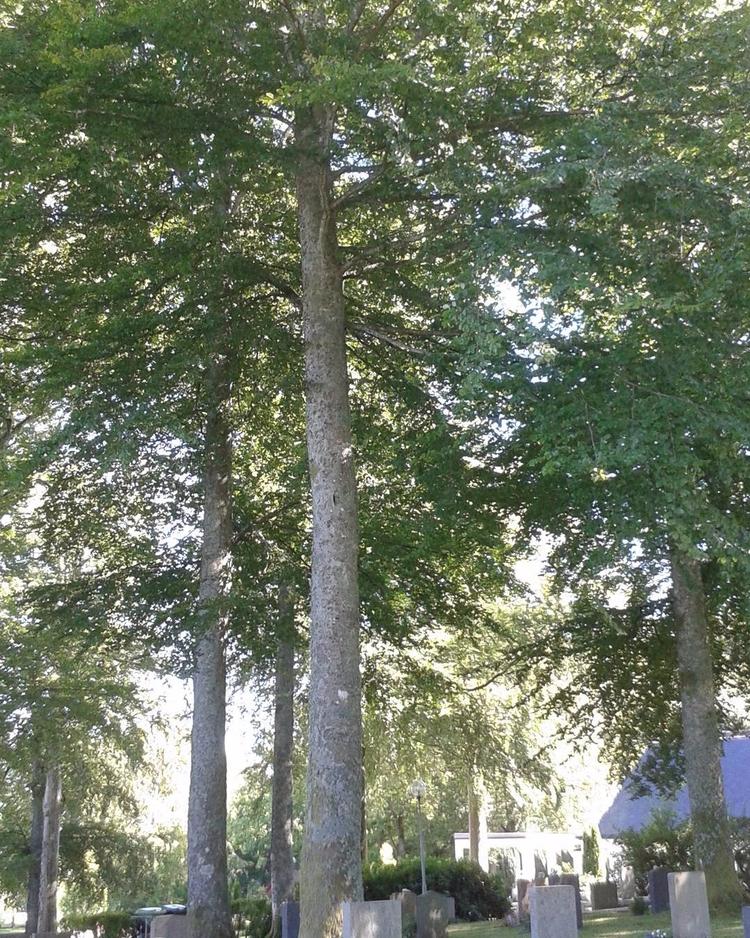 Skogskyrkogården Kungsbacka ~ e - skogskyrkogardar | ello