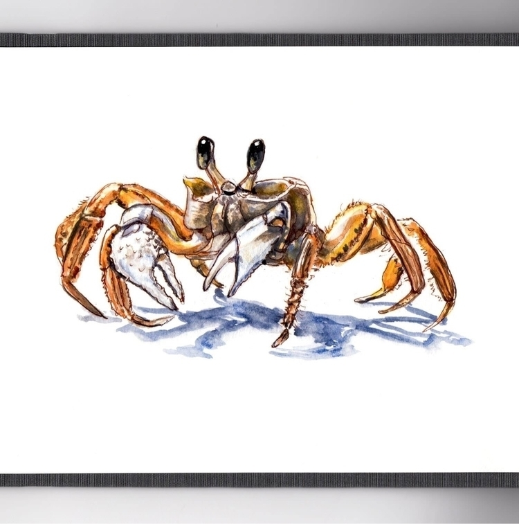 Tiny Crab - WorldWatercolorMonth - doodlewash | ello
