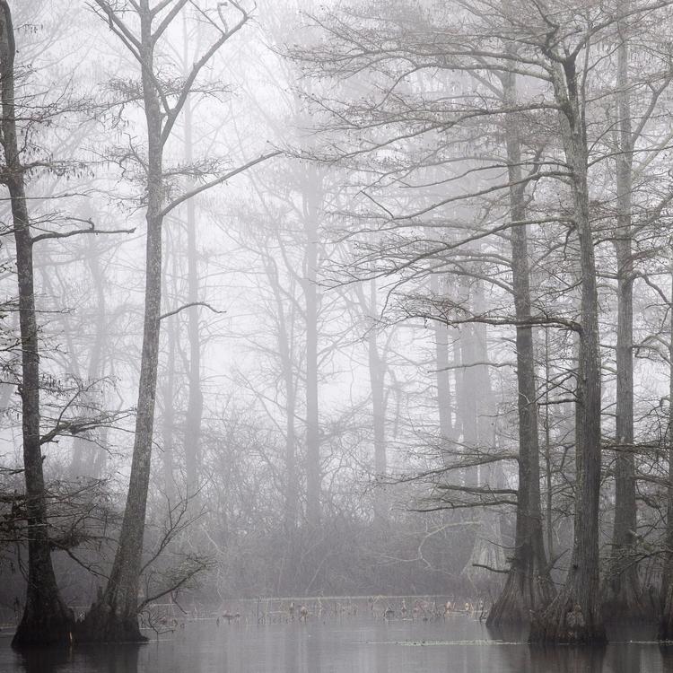swamps dagobah - stockhuman | ello