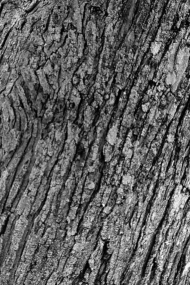 tree - gaypunk | ello