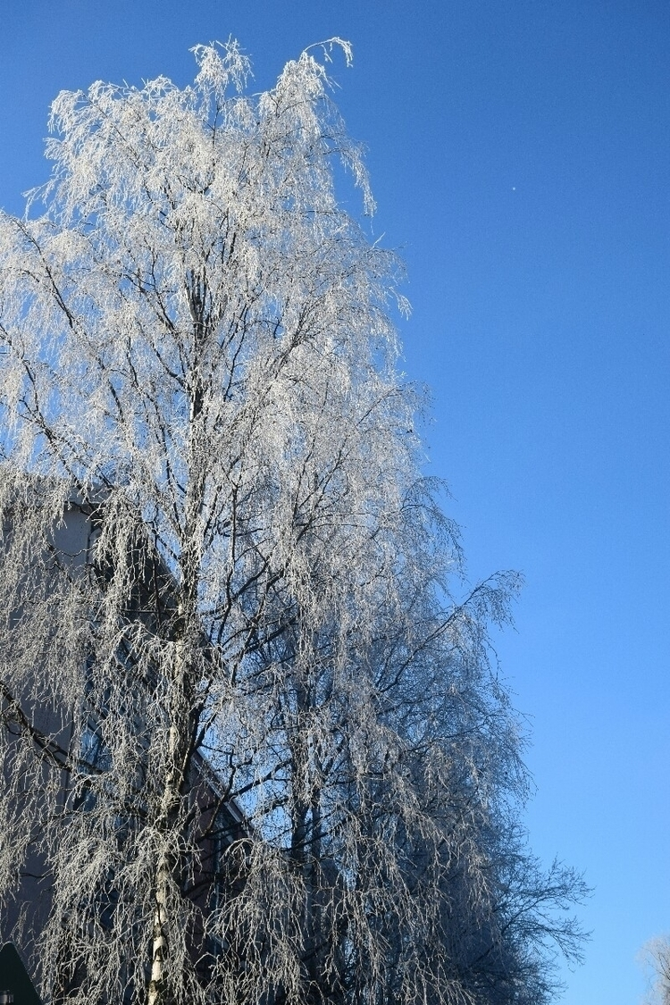 Treeze - unvit | ello