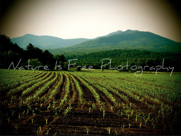 opportunity noticing beauty  - Vermont - natureisfree | ello