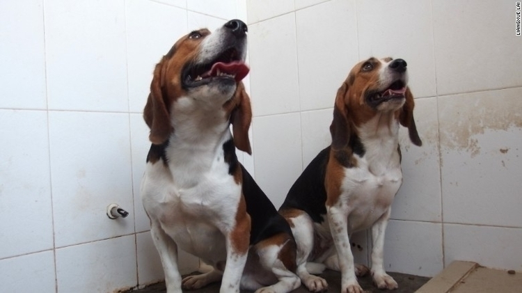 blogpost today asks beagles? an - zoombubba | ello
