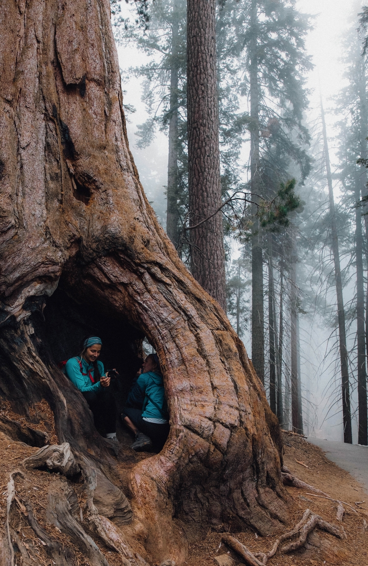 Friends | Sequoia National Fore - toriamia | ello