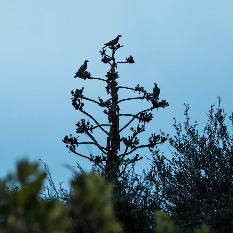 birds tree - quimichi | ello