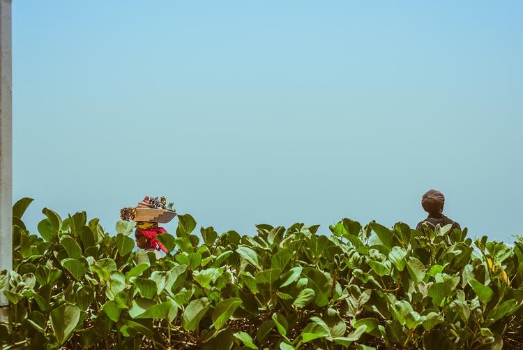 Hedge (2017 - ello, ellominimal - markerwrisberg | ello