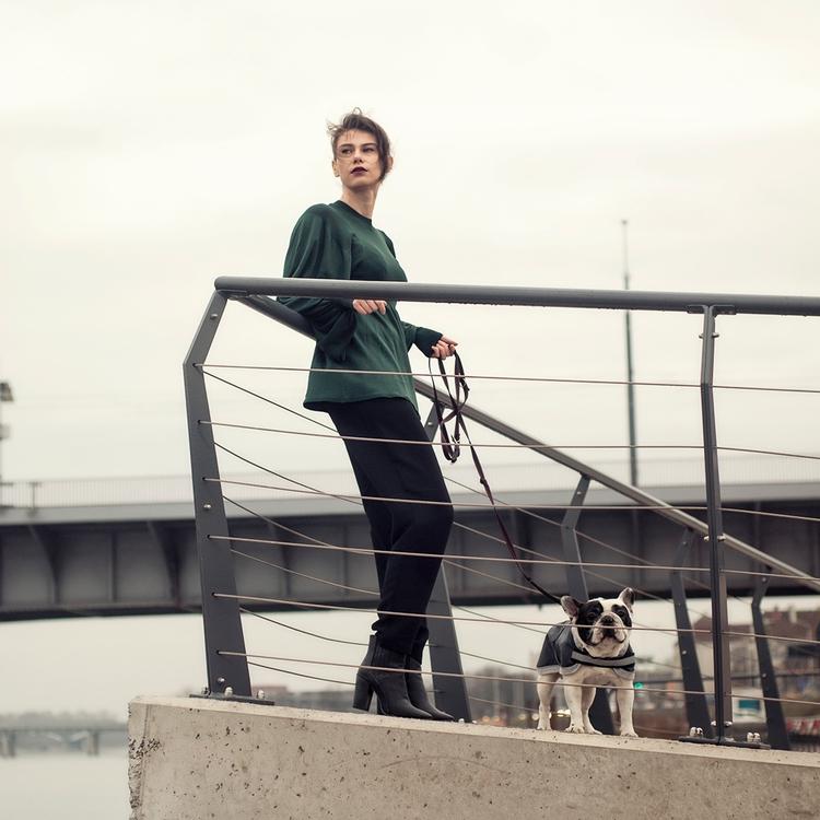 portreit, frenchbulldog - pocozyc | ello