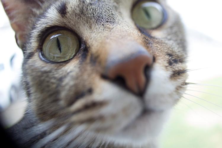 Kai kitty - cat, camera, whacking - dead_splicer   ello