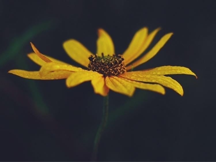 Flower rain - minimalism, nature - shanobi_juan_kanobi | ello