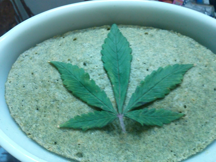 Cannabis crêpe cannaflower - Food - pheonfox | ello
