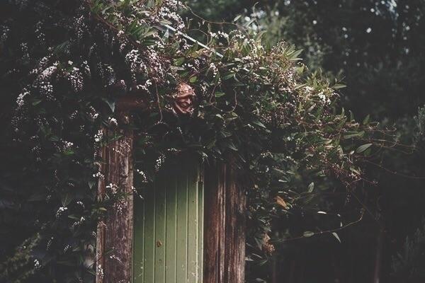 Nestled fringe forest, studio b - spiritwoods | ello