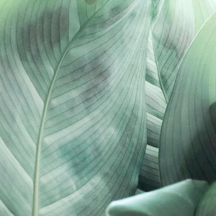Leaves - leaves, botanical, nature - andreigrigorev   ello