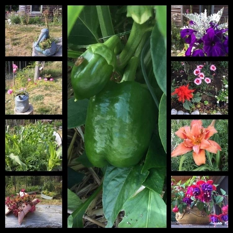 peak beautiful sights gardens - organicgardening - laurabalducci | ello