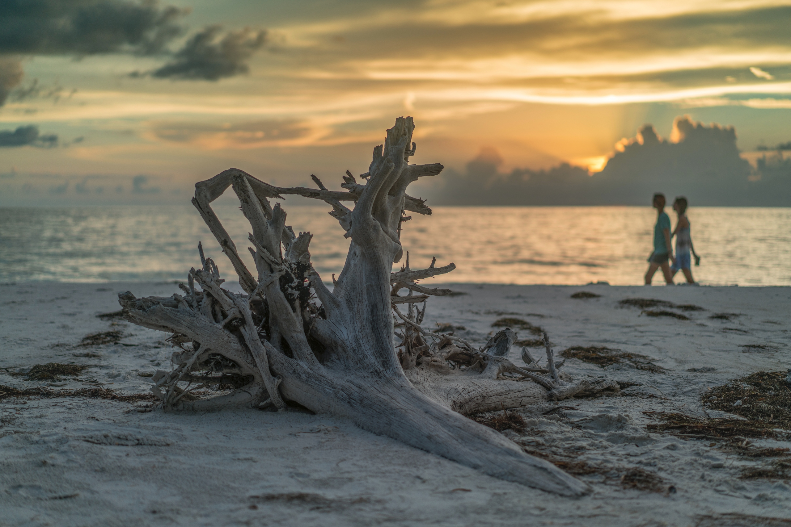 Driftwood Coast hideaway people - rickschwartz | ello