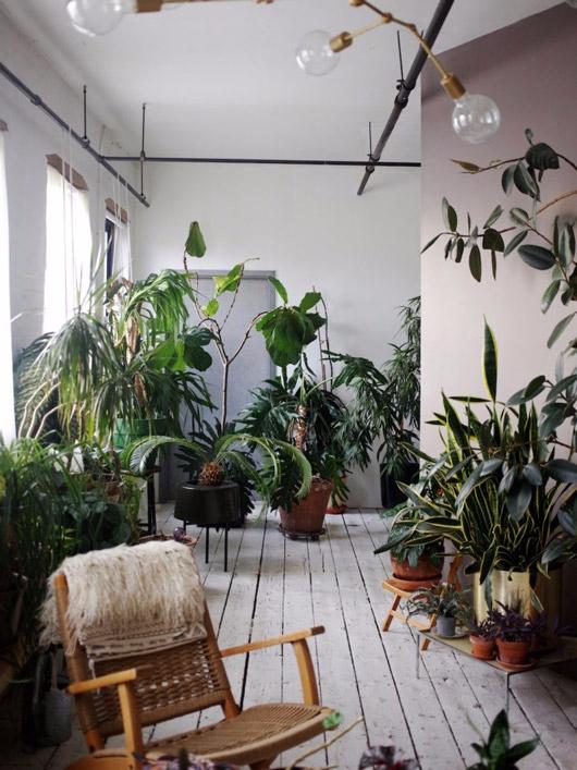 jungle land - sfgirlbybay | ello