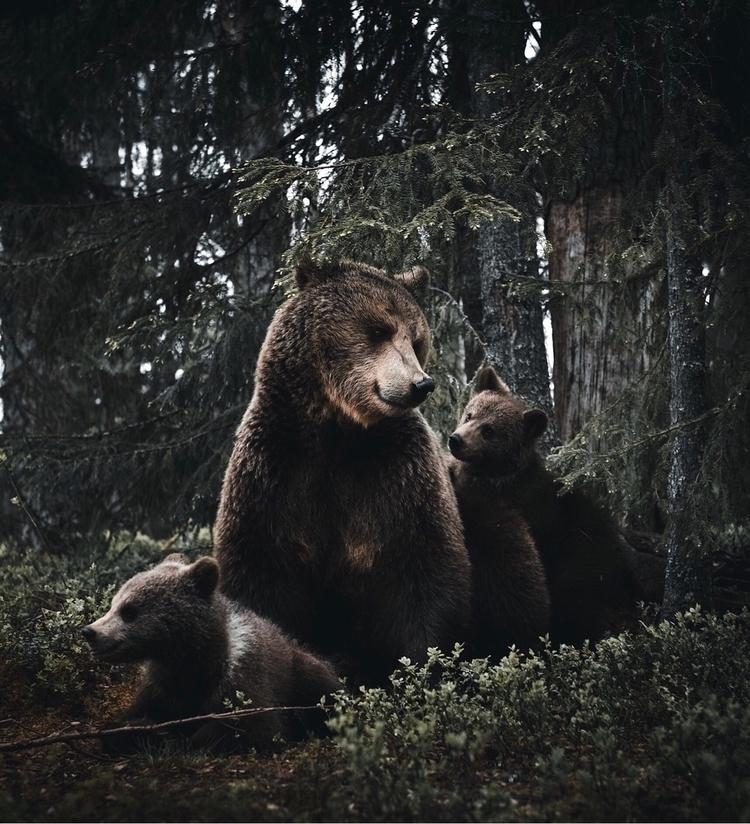 Animals hearts feel, eyes famil - stiannorum | ello