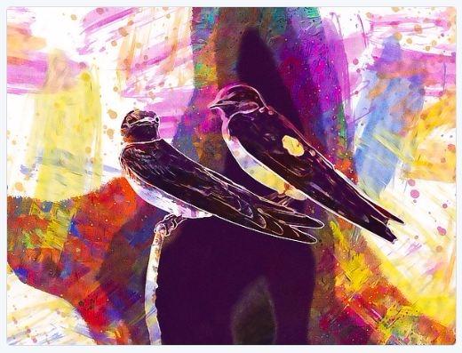 artwork sale! - Swallow bird - designcluj | ello