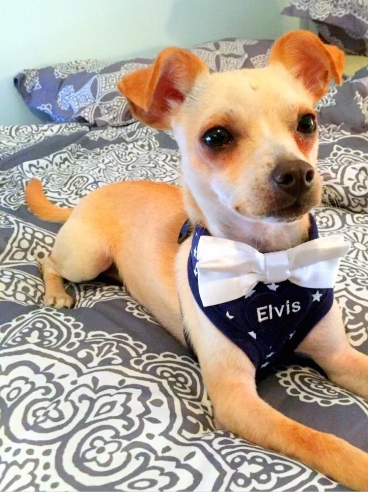 :sparkles:Gorgeous Elvis rockin - homeiswherethepugis | ello