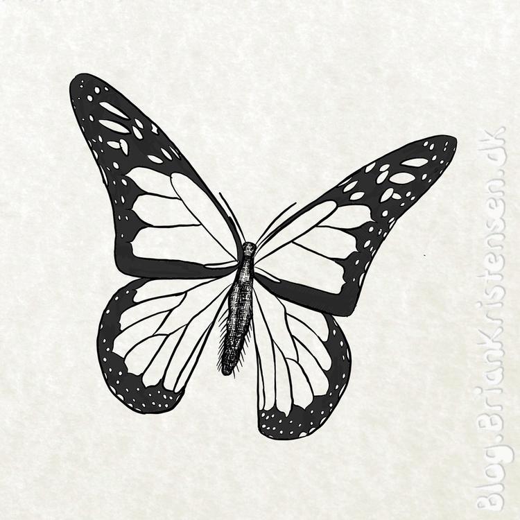 monarch, butterfly - art2u | ello