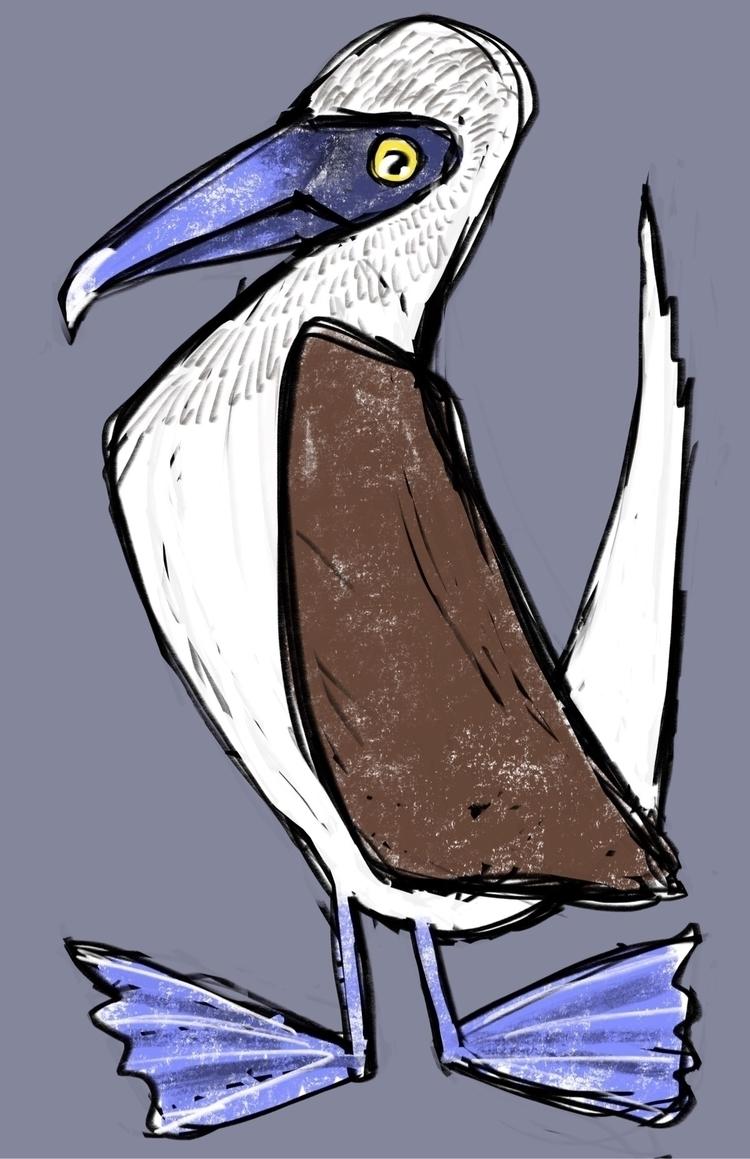 Boobies - bird, illustration - reneeleigh | ello