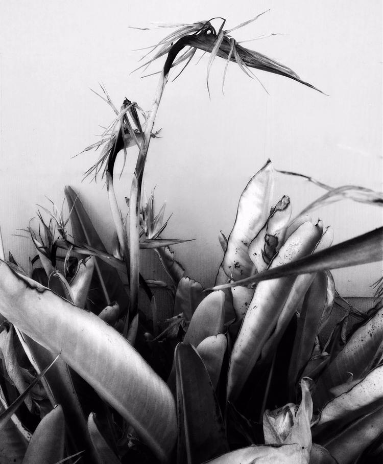 summer, II - photography, textures - voiceofsf | ello