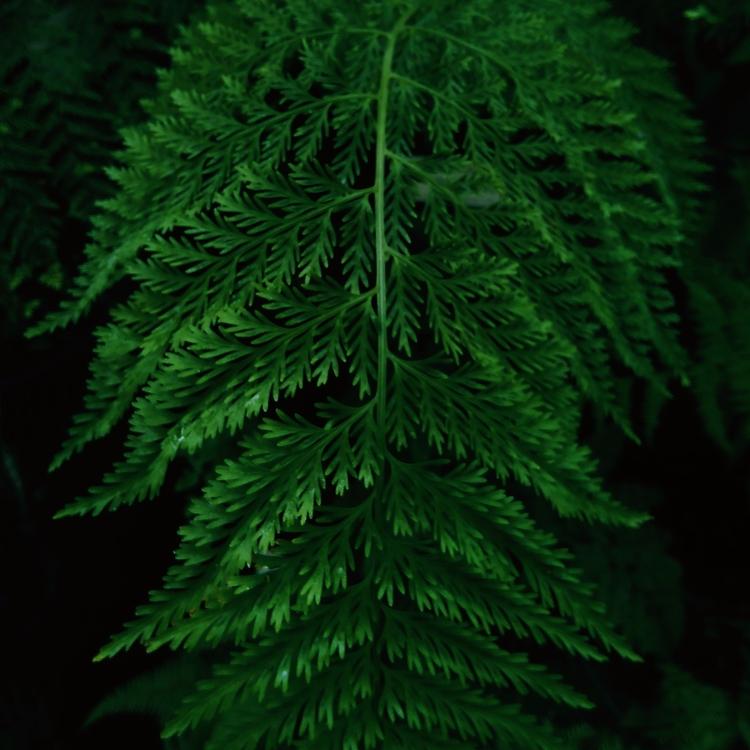 PLANT, GREEN, BOTANICALGARDEN - sselepohmi | ello