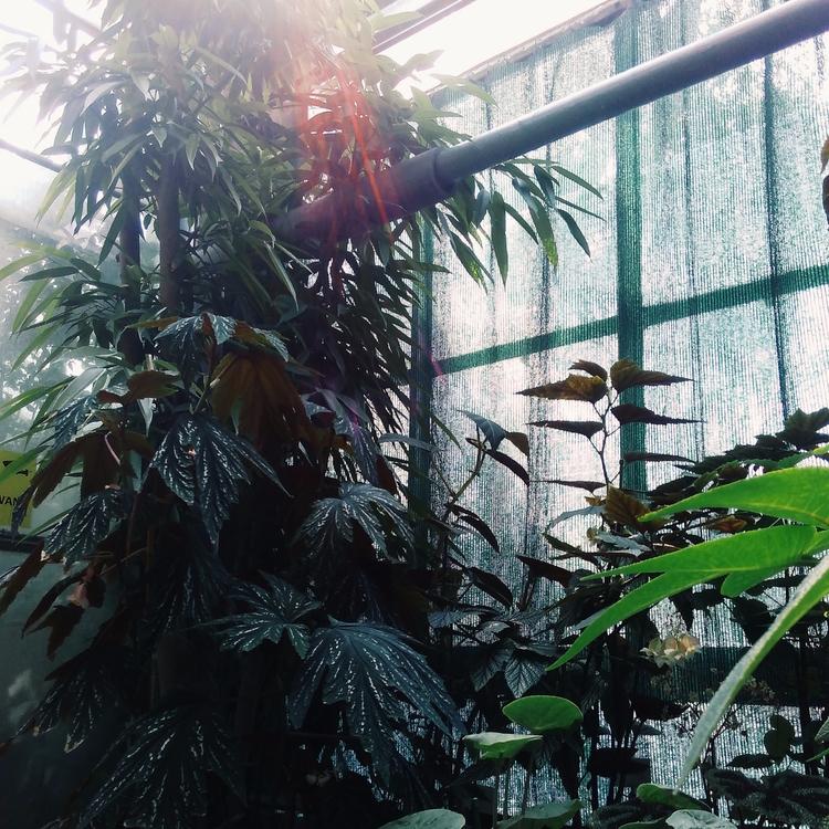 PLANTS, BOTANICALGARDEN, KRAKÓW - sselepohmi | ello