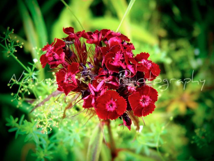 love nature, find beauty ~Vince - natureisfree | ello