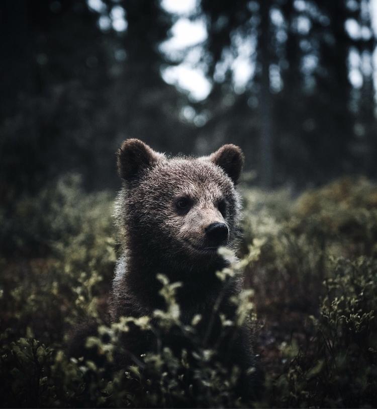 bear thinking great day plan ad - stiannorum | ello