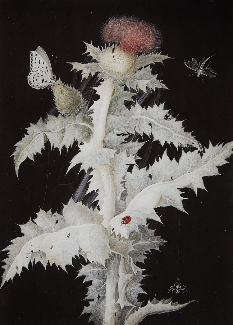 Thistle Branch Butterfly, Drago - modernism_is_crap | ello