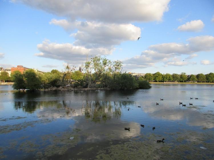 fugleoeen, sortedamssoe, ilikebirds - northernlad | ello