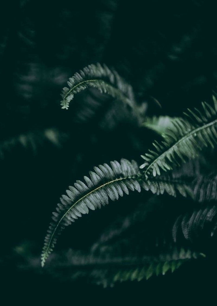 Dark Foliage 1 2 | Fine Art Pho - elementalprints | ello