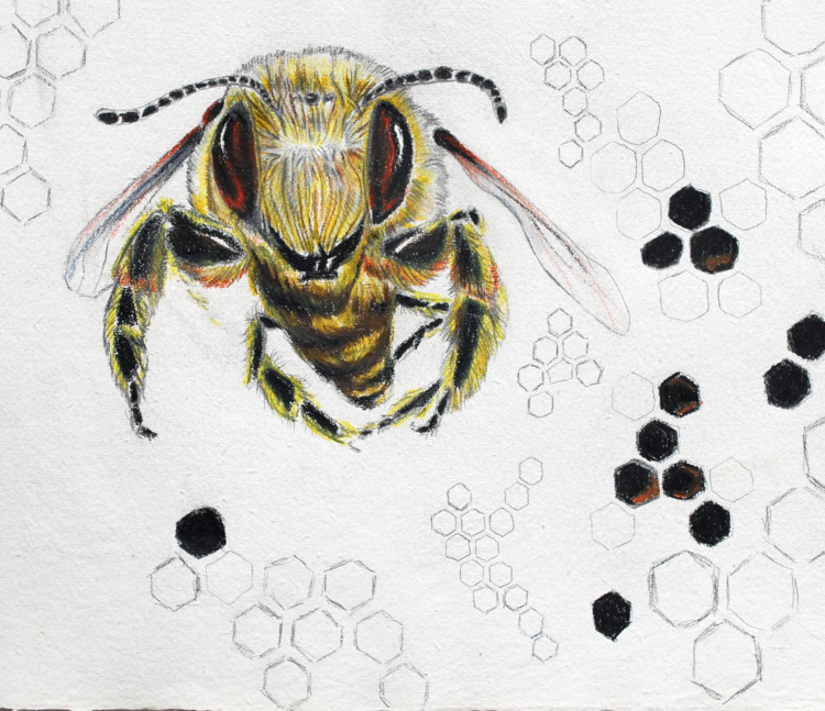 Honey Bee Illustrations works - osvinci | ello
