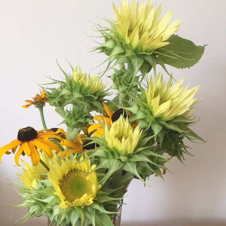 floral work. Chicago, 2017 - kaytbee6 | ello